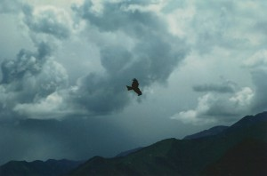 Eagle soaring over the mountains