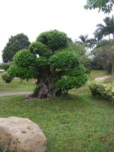 Li-Garten.Bonsai