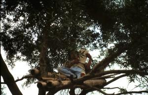 Bauer Wang im Baum