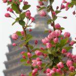 Blütenzauber bei der Pagode