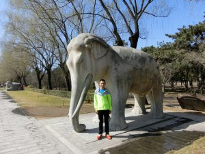 elephant in 2016