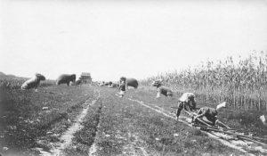 Sacred Way 1900
