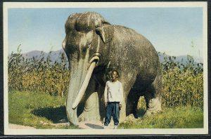 elephant 007