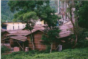 Auf einer Teeplantage